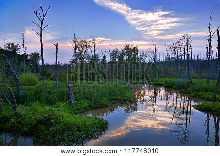 Serene Pond at Twilight