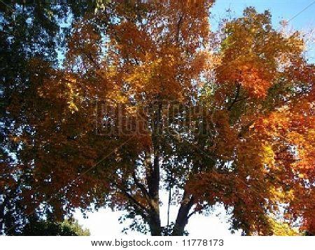 Multi-color tree