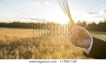 Closeup Of Male Hand Holding A Wheat Ear Over A Background Of Blurred Wheat Field