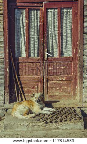 Sleepy Mongrel Guard Dog