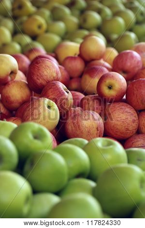 Fresh Green Red Yellow Apples