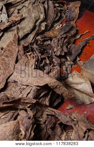 tobacco leaves for cigars