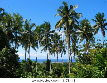South Pacific Forest