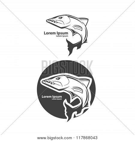 Barracuda Fish Danger