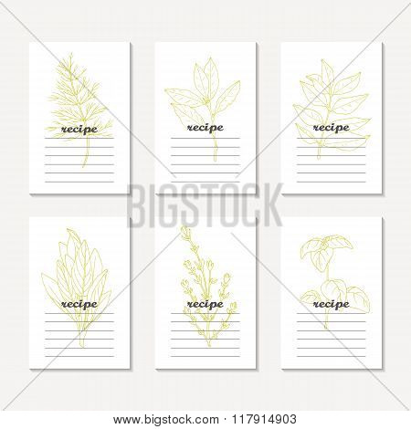Recipe cards collection with hand drawn spicy herbs. Sketched dill, bay leaf, curry, sage, basil, th