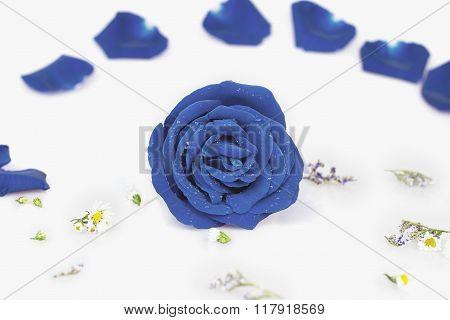 Dye Blue Rose With Rose Petals, Pastel Color