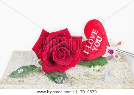 Red Rose On Plate With White Background