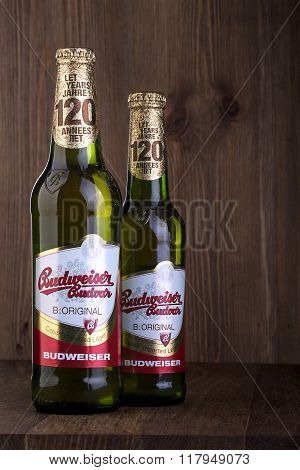 CHISINAU MOLDOVA - FEBRUARIE 2016: A two bottles of Budweiser on the wooden table From Anheuser-Busch InBev Budweiser is one of the top selling domestic beers in the United States.