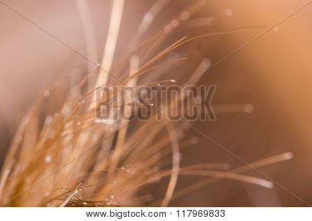 Defocused Abstract Background In Macro Scale