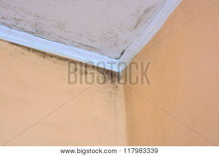 Mold In A Edge