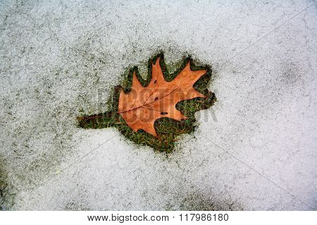 Leaf and melting snow