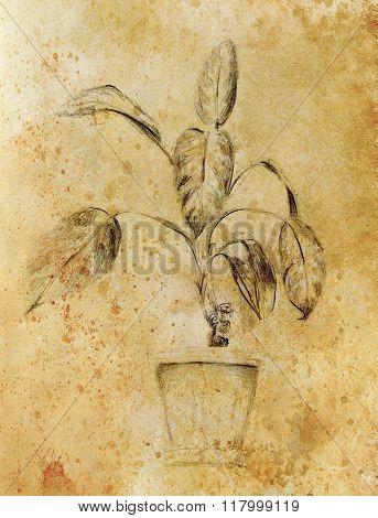 Hand drawn ropical plants. Plants Dieffenbachia sketch. Sepia color.