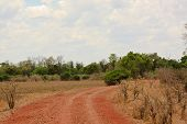 car road get inside the bush in South Luangwa National Park in Zambia poster