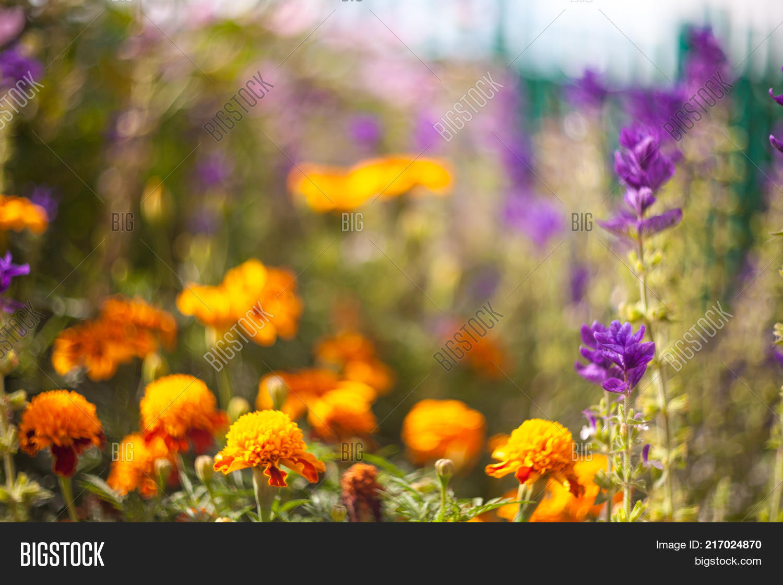 outdoor nature photography. Beautiful Garden Flowers. Nature Photography. Outdoor Art Selective Focus. Photography U