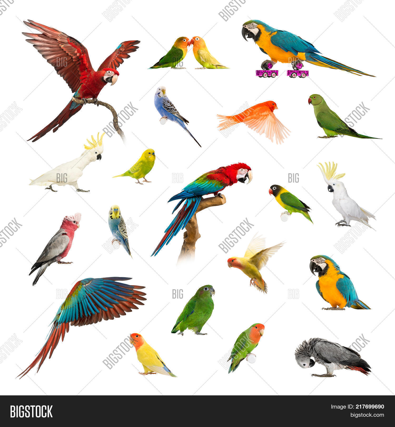Large Collection Bird Image Photo Free Trial Bigstock