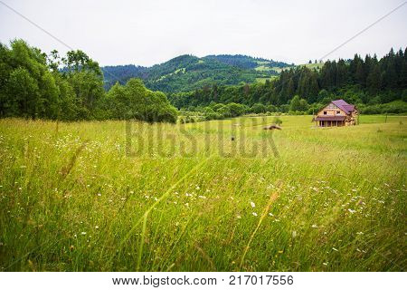Carpathian village in the mountains in summer