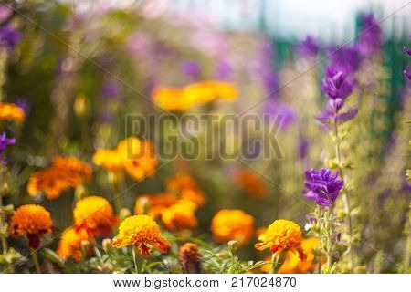 Beautiful garden flowers. Nature photography. Outdoor photography. Art photography. Selective focus.