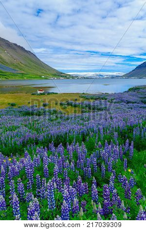 Landscape and view of Isafjordur town in the west fjords region Iceland