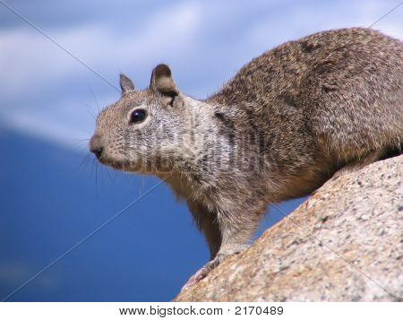 Squirrel Sitting At A Rock