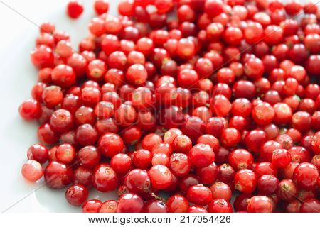 Raw fresh cowberry on white background. Fresh ripe cowberry berries on white.