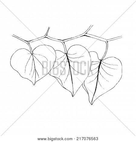 Leaf liner illustration on white. Border decoration.