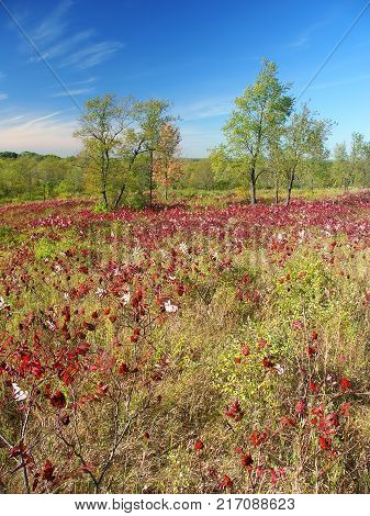 Beautiful hillside of the Kettle Moraine State Forest in Wisconsin