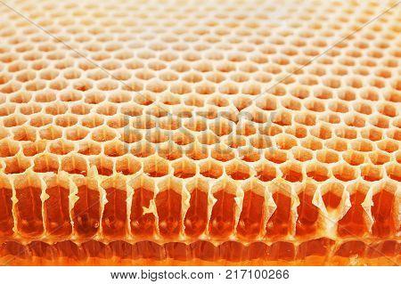 Slice of golden real honeycomb. Shot close up