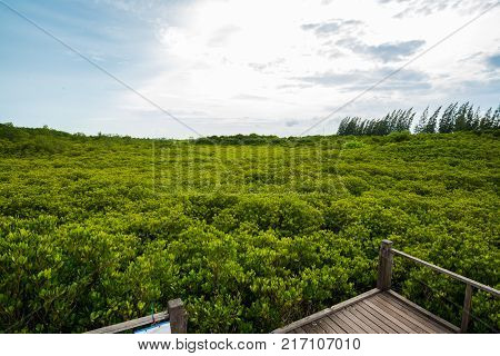 Tung Prong Thong (Golden Mangrove Field) in Rayong (Eastern of Amazing Thailand)