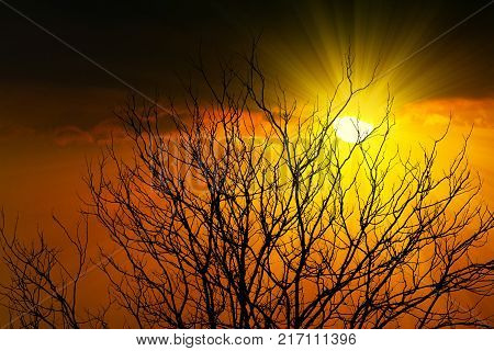 Abstract silhouette branch of dead tree at sunset with sunbeam