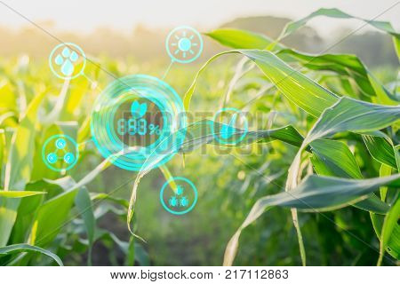 Corn Inspection Results in Agroforestry With Modern Technology Concepts