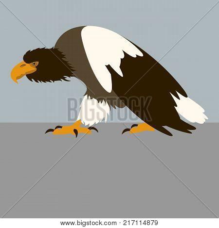 steller sea eagle bird vector illustration flat style profile