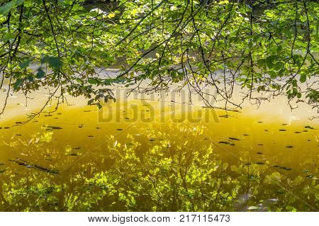 sunny illuminated riparian detail at waters edge with leaves and twigs at summer time