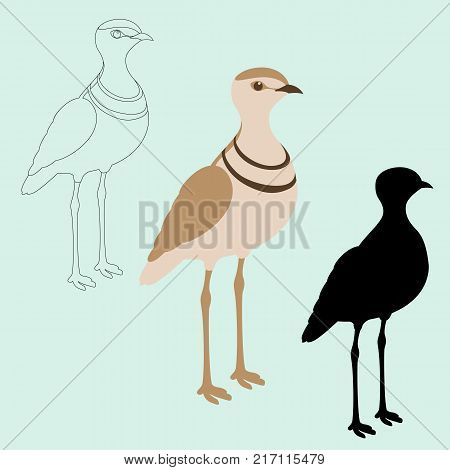 double - banded courser bird black silhouette vector illustration flat style profile view