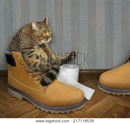 The cat defecates on a big shoe in the apartment.