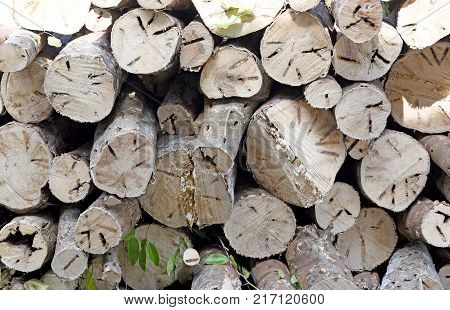 close up of Wood texture or wood fire