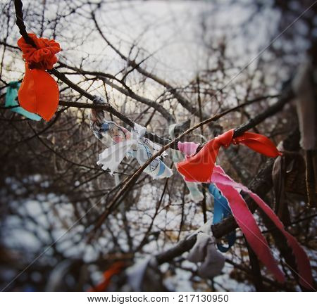 Shamanic tree, religious bandages. Buryat sacred place where colored knits are knitted