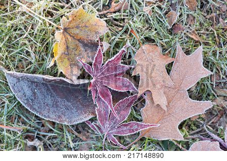 frozen foliage on a meadow in a winter morning
