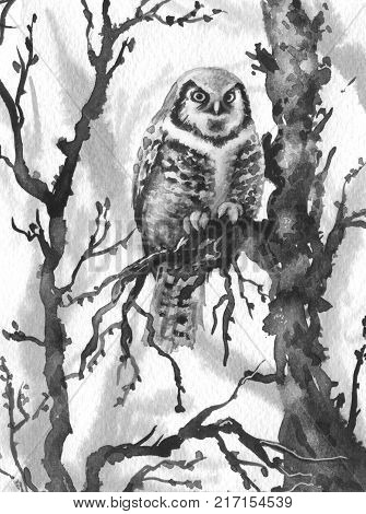 Watercolor painting. Hand drawn illustration. Owl sitting on tree branch. Winter forest scene with northern hawk-owl. Monochrome sketch of night bird.