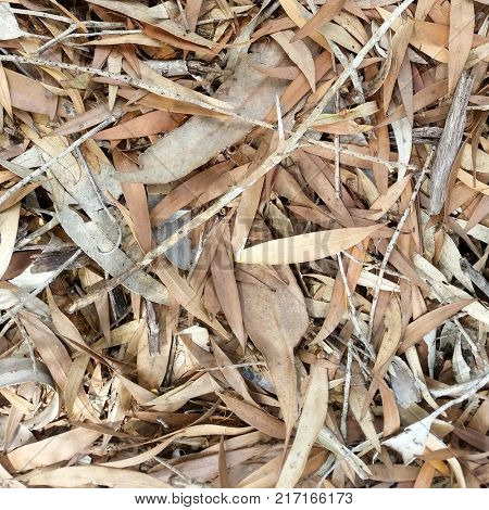 Forest Floor leaves, dead leaf texture, leaf background texture, leaf background, dry leaves on ground,