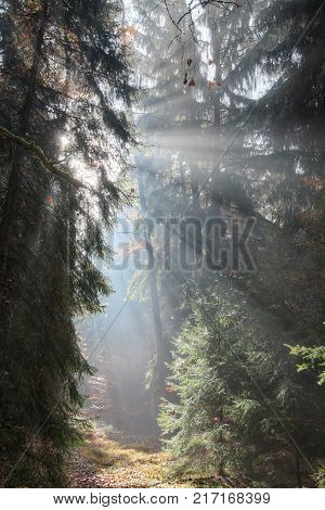 God beams - sun rays n the early morning forest