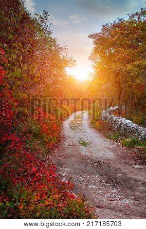 Autumn leaves background. Autumn leaves background . Autumn Concept .