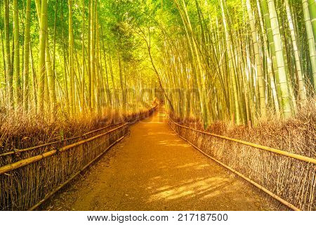 Surreal path in bamboo grove at Sagano in Arashiyama, sunlit. The forest is Kyoto's second most popular tourist destination and among the 100 phonetic stations in Japan. Meditative listening concept.