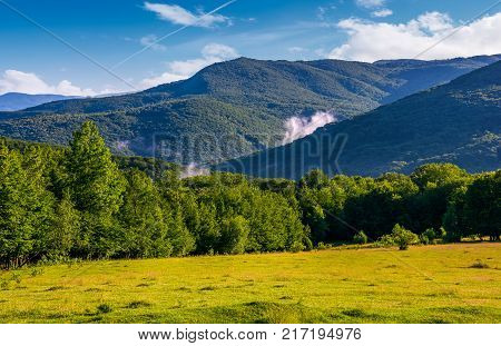 Grassy Meadow On Forested Hillside