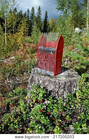 Wild growing lingon berries closeup, Swedish nature