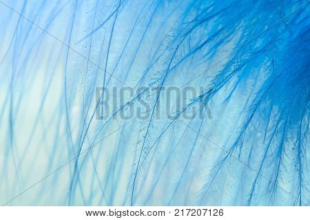 Macro feather sky blue color with small droplets.Curtain made of a feather. Abstract macro.