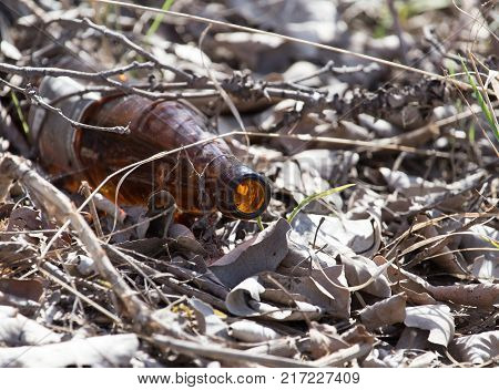 Glass bottles in nature. trash