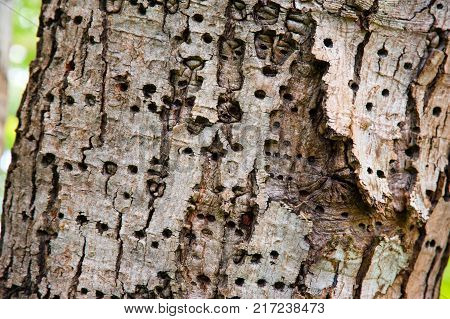 Bark on trunk of a tree with insect holes