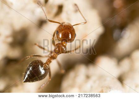Ant. close