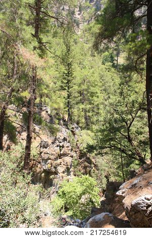 Trees on rocks in Samaria Gorge on Crete