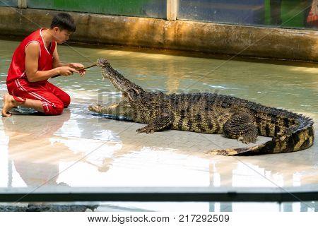 Siracha zoo Conburi Thailand Sep 2017 : crocodile performing a show